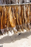 Tobacco leaves drying, Kona, Big Island, Hawaii Islands, USA