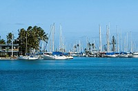 Sailboats docked at a harbor, Honolulu, Oahu, Hawaii Islands, USA