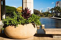 Close-up of a potted plant at the poolside, Honolulu, Oahu, Hawaii Islands, USA