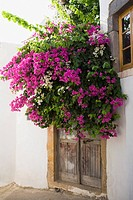Bougainvillea flowers in front of a door, Patmos, Dodecanese Islands, Greece
