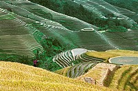 Scenery of Longji Terraces, Longsheng County, Guilin City, Guangxi Zhuang Nationality Autonomous Region of People's Republic of China, FOR EDITORIAL U...