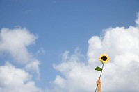 Person holding sunflower up against sky