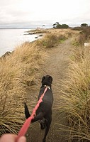 Person with dog on seashore path