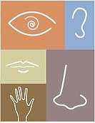 An illustration of body parts representing the five senses