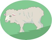 Illustration of a sheep