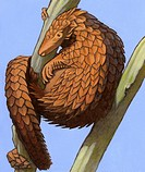 Illustration of a tree pangolin