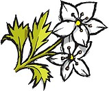 A drawing of white flowers