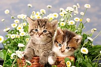 two kittens in basket between flowers