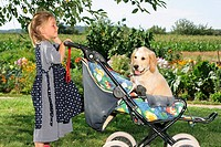 girl watching Golden Retriever puppy in baby carriage