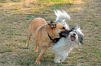 two dogs - playing