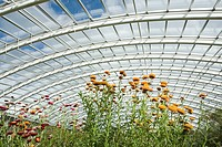 Plants in a large greenhouse