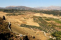 Landscape of the region of Ronda. Andalucia. Spain
