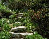 Mountains, steep track, flagstones, stairways, footpath, traveling-steep track, way, ascent, nature-stone-stairways, vegetation, Alpine flowers, Alpin...