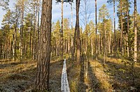 Sweden, Muddus National park, forest, path, wood, late-night-autumn,