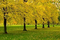 Trees in a park, High Park, London, England