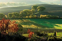 Val d`Orcia, cultivated landscape with fields and deciduous trees, morning mist, autumn colours, Tuscany, Italy