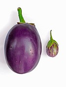 Big and small Brinjals. Common Name: Brinjal, Eggplant. Scientific Name: Solanum melongeana L. (Solanaceae) Origin: India. It is a low-growing bushy a...