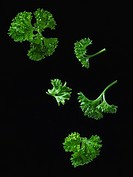 Parsley (thumbnail)