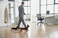 Businessman with two dachshunds