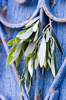 Olive branch on blue painted wooden wall