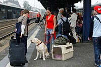 Woman, with, Labrador, Retriever, on, leash, baggage, and, kennel, on, platform, railway, station, luggage,
