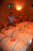 Man, testing, wine, wine, casks, Winery, Solopaca, Campania, Italy, wine, celler,