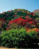 Forest In Autumn,Korea