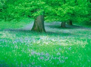 Wild Flowers And Trees