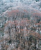 Forest In Winter,Korea