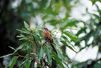 A Bird On The Tree,Korea