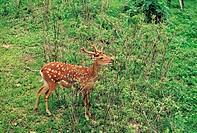 A Deer,Seoul Forest Park,Seongdong-gu,Seoul,Korea
