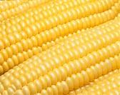 Corn Japan Food