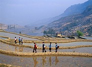 Rice Terrace Yuanyang Yunnan Province China Asia Industry Agriculture