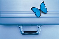 A butterfly on a briefcase