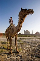 Boy riding camel by Yamuna River with Taj Mahal in background, Agra. Uttar Pradesh, India