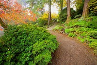 Fall colors at Crystal Springs Gardens. Portland, Oregon, USA