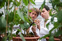 Studying the Gernika pepper physiology in greenhouse, Departamento de Producción y Protección Vegetal, Neiker Tecnalia, Instituto de Investigación y D...