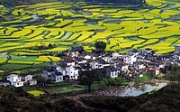 the rape field and folk houses in Wuyuan,Jiangxi Province,China