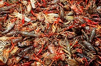 Crawfish.