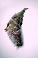 A cod