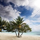 Trees on the beach of Costa Maya Mexico, Caribbean