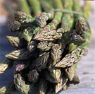 Closeup of asparagus spears tied up together