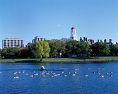 Charles river, Boston, United States of America