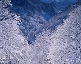 Fresh snow Nakatsugawa River Tsunan Niigata Japan
