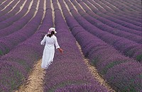 Girl in Lavender field, Plateau de Valensole, Provence, France