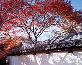 Autumn Tojiin Kyoto Kyoto Japan Red leaves Blue sky Wall