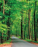 Tree_Lined Road,Ile_de_France,France