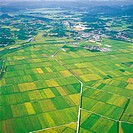 Aerial View Of Field,Jeonnam,Korea