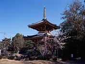 Anraku_ji Temple Itano Tokushima Japan