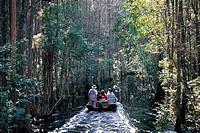 Okefenokee Swamp, Georgia, USA